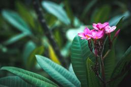 Nature Martinique Dan Beal